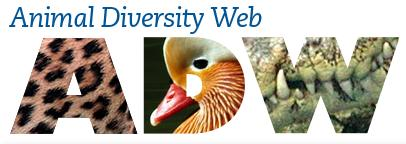From the University of Michigan's Museum of Zoology, Animal Diversity Web has detailed information about all the phyla of animals.