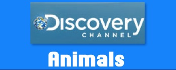 Discovery News brings you information about animals, including endangered species, animal videos, and more.