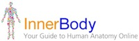 human body,images,interactive,human anatomy